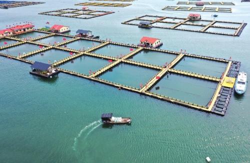 """碧海蓝天富宁德        近年来,福建省宁德市创新海洋环境综合治理新模式,探索出一条产业发展与生态保护协同并进新路,这方面的""""宁德经验"""",也成为全国水产养殖高质量发展绿色典型案例。图为宁德三都澳大黄鱼养殖区。新华社"""