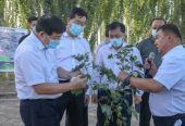 国家发改委负责人带队赴新疆开展棉花目标价格专题调研