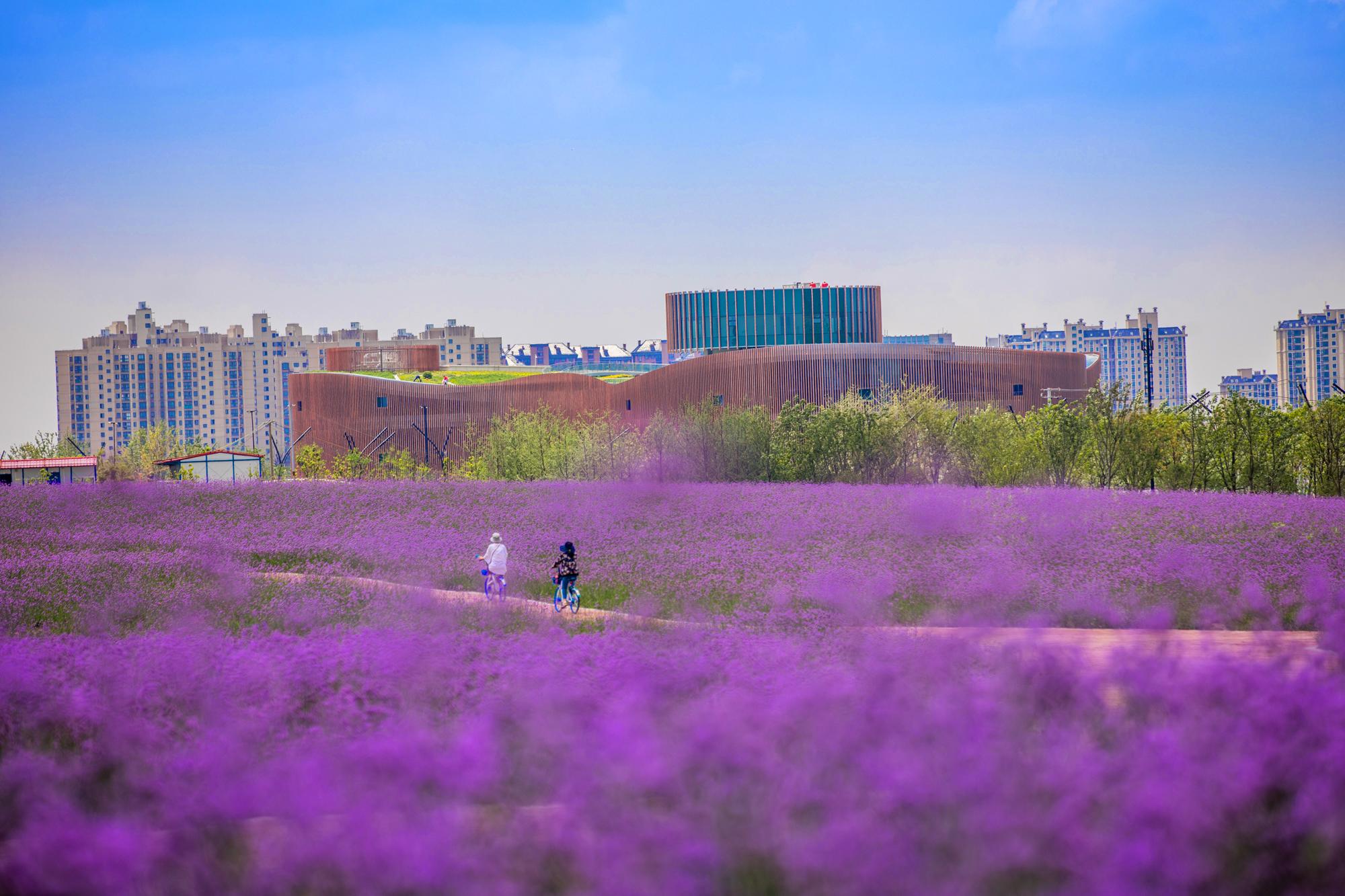 奉贤新城:乘势而上的未来之城
